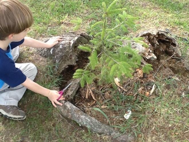 Tree exploraion