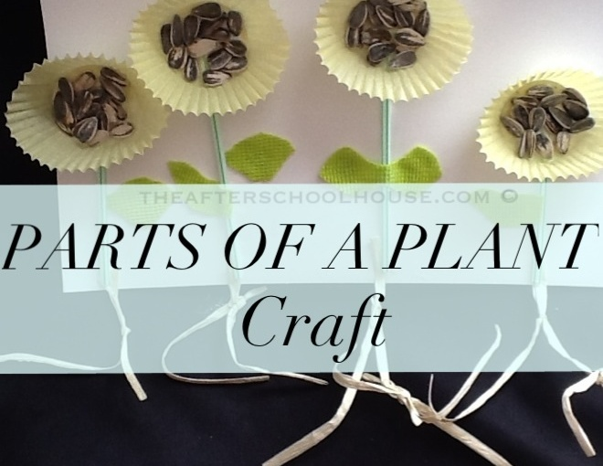 Sweet and Simple Parts of A Plant Craft